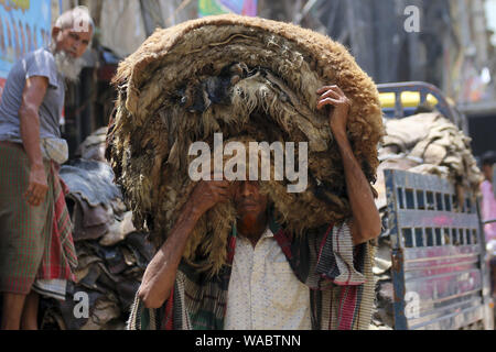 Dhaka, Bangladesh. 19th Aug, 2019. A worker carrying rawhides after applying salt out of a warehouse at the Posta area in Dhaka. In the post-Eid few days, it has been a common scenario that traders at Posta area, which is known as a wholesale market for rawhide, are busy processing rawhide by rubbing salt. Not only the rawhide traders but tanners are also busy buying rawhide from the wholesalers during Eid-ul-Azha. Credit: Sultan Mahmud Mukut/SOPA Images/ZUMA Wire/Alamy Live News - Stock Photo