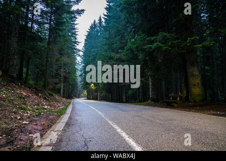 Foggy dark mood over road through forest alongside conifer trees in the night illuminated by some street lamps - Stock Photo