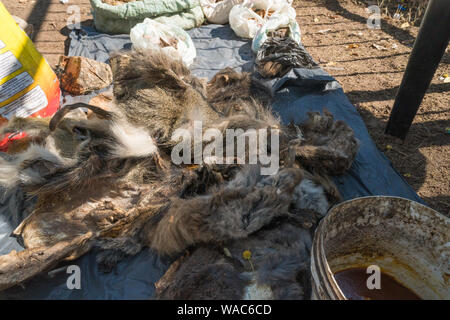 African muti or muthi which is traditional medicine in Southern Africa on display at a street vendor stall in Hazyview, Mpumalanga, South Africa - Stock Photo