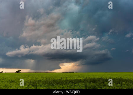 A tornado spins in the distance beneath a supercell thunderstorm near Joes, Colorado, USA. - Stock Photo