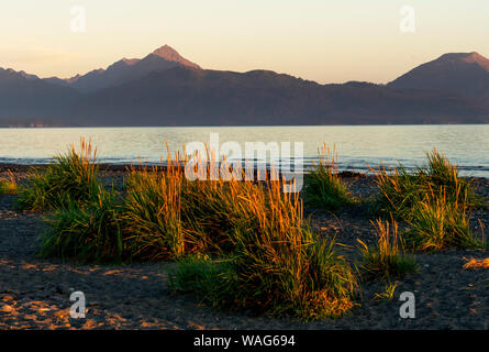 Sunset lit grass on the Homer Spit with mountains in the distance - Stock Photo