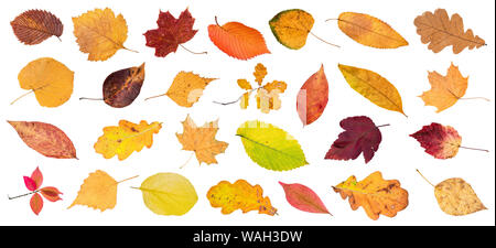 set of various colorful fallen leaves cut out on white background - Stock Photo