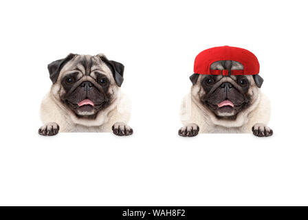 frolic smiling pug puppy dog wearing red cap hat, with paws on white banner, isolated - Stock Photo