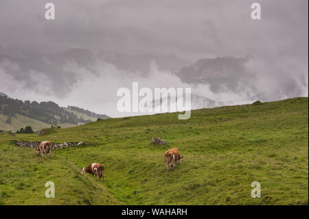 The Sella and the Pordoi Passes in South Tyrol, Italy - Stock Photo