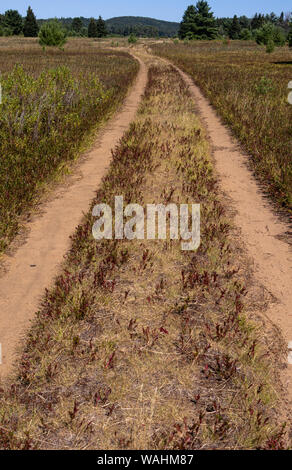 Long dirt path through a field towards forest in a field. - Stock Photo