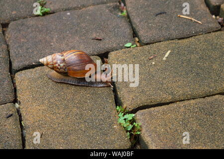 Closeup of a snail crawling on pavement, slow life concept - Stock Photo