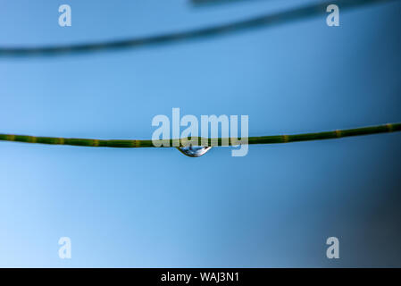 Water droplet hanging onto stem - Stock Photo