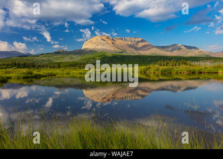Sofa Mountain reflecting into beaver pond in Waterton Lakes National Park, Alberta, Canada - Stock Photo