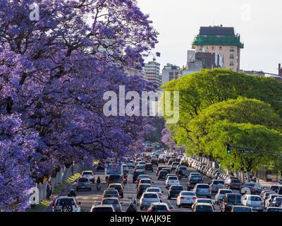 Jacaranda trees on Avenida Pres. Figueroa Alcorta in Recoleta. Buenos Aires, capital of Argentina. Stock Photo