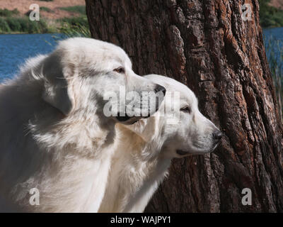 Great Pyrenees lakeside. - Stock Photo