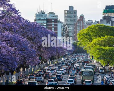 Jacaranda trees on Avenida Presidente Figueroa Alcorta in Recoleta. Buenos Aires, Argentina. Stock Photo