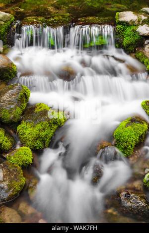 Fern Spring, Yosemite National Park, California, USA. - Stock Photo