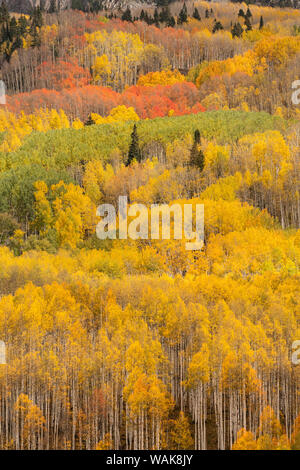 USA, Colorado, Gunnison National Forest. Forest in autumn colors. Credit as: Don Grall / Jaynes Gallery / DanitaDelimont.com - Stock Photo
