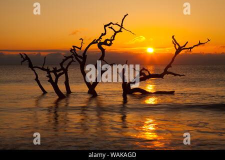 USA, Georgia. Jekyll Island, Driftwood Beach at sunrise. - Stock Photo