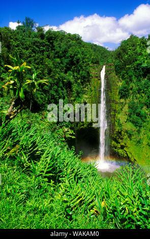 Lush vegetation framing Akaka Falls, Akaka Falls State Park, The Big Island, Hawaii, USA. - Stock Photo