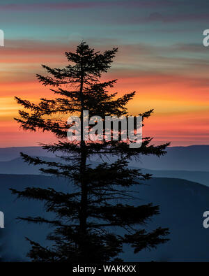 USA, West Virginia, Blackwater Falls State Park. Tree and landscape at sunset. Credit as: Jay O'Brien / Jaynes Gallery / DanitaDelimont.com - Stock Photo