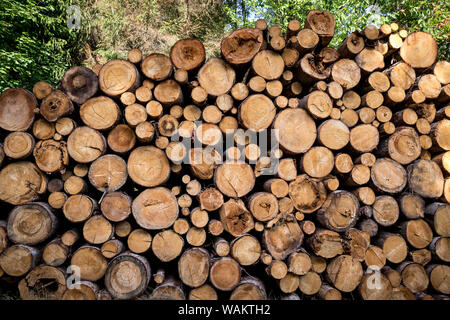 Cut Tree Trunks Stacked in Forest. - Stock Photo