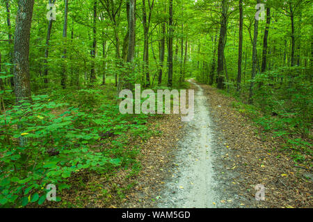 Long footpath through a green forest - Stock Photo