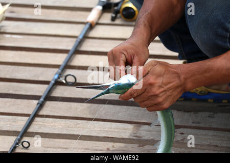 Fishermen are removing the hook from the fish. Fishermen are fishing. - Stock Photo
