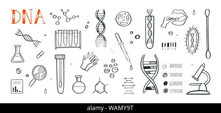 Genetic engineering and medical research vector background. DNA helix, genome testing elements. Chemical laboratory concept - Stock Photo