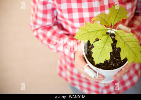 Sprout a young oak tree in a child hands. The concept - the life beginning, care, successful future growth. Oak sapling in hands. Boy going to plant a
