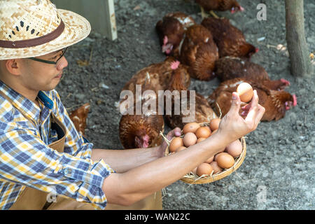 young smart farmer wear plaid long sleeve shirt brown apron are holding fresh chicken eggs into basket at a chicken farm in him home area
