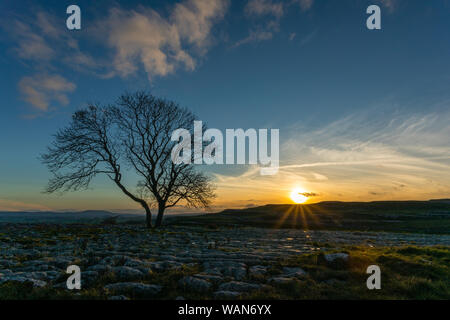 The sun sets during blue hour at the single Lone Tree at Malham Cove in the Limestone Pavement in Yorkshire, appearing to defy to forces of nature. - Stock Photo