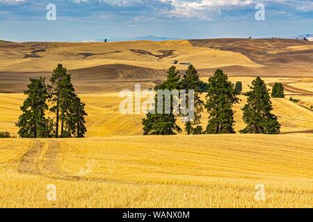 Washington, Palouse Region, Kamiak Butte County Park, views, fall season, wheat fields after harvest - Stock Photo