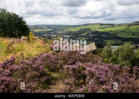 Elevated view looking towards Slaithwaite in the Colne Valley, West Yorkshire from Crosland Heath where the heather is in full bloom in late summer - Stock Photo
