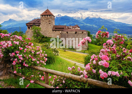 Vaduz castle, Liechtenstein, in the Alps mountains, with beautiful blooming pink rose flowers - Stock Photo