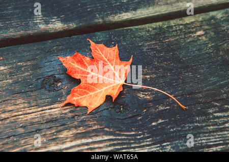 Beautiful natural closeup background with red autumn fall maple leaf on wooden planks. View from top above with copyspace. Seasonal card wallpaper. - Stock Photo