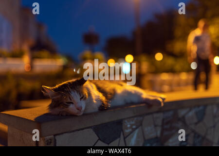 Homeless cat sleeps on the sidewalk - Stock Photo
