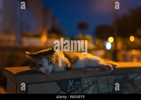 Homeless cat sleeps on the sidewalk - Stock Photo