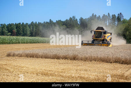 Harvester at the harvest of a grain field - Stock Photo