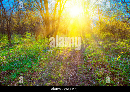 spring landscape with sun shining through the branches - Stock Photo