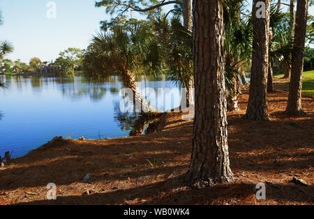 Palm trees growing next to the lake in Florida, USA - Stock Photo