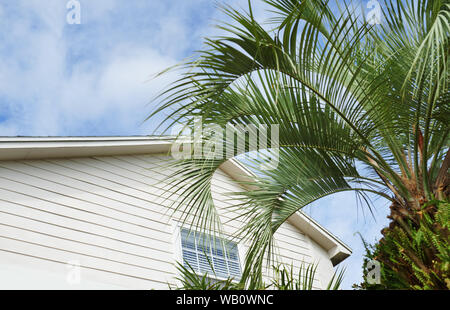 Residential building and palm tree at the backyard - Stock Photo