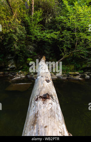 Fallen tree over the creek in the Smoky Mountains National Park. - Stock Photo