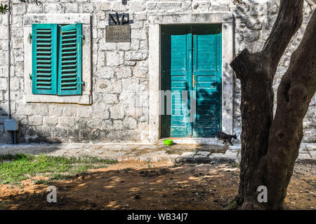 A stray black and white cat walks across the doorstep past teal colored doors and shutters in the medieval walled city of Kotor, Montenegro - Stock Photo