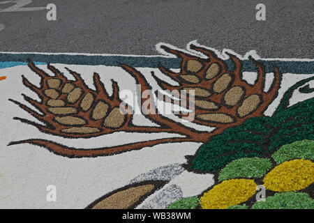 flower petals, grains, rice, beans and seeds making a pattern of ears of barley on a road in the village of Castelraimondo to celebrate Corpus Christi - Stock Photo