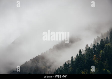 Snowy trees in a fog cloud on the mountain, Evergreen Forest in winter, Racha, Georgia - Stock Photo