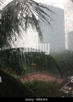 A beautiful shot of raindrops on a window with a view of a palm tree and a building in the distance - Stock Photo