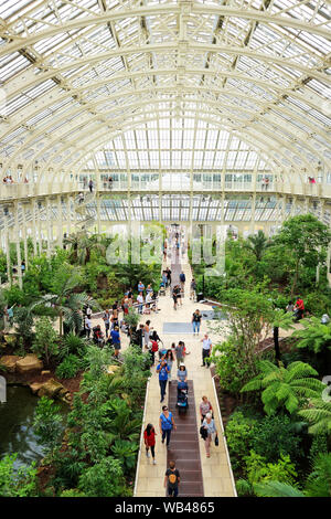 The palm house interior at Kew gardens, London - Stock Photo