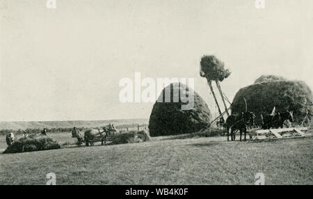 This photo dates to the early 1920s. Its caption reads: Stacking Hay by Modern Methods. A scene on the YU ranch, Big Horn County Wyoming. - Stock Photo
