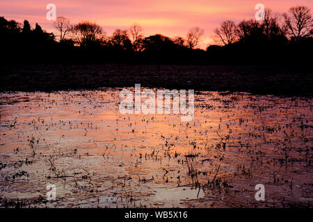Sunrise Sky with silhouette of trees and icy pond in foreground - Stock Photo