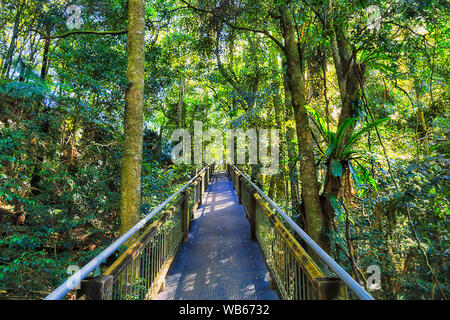Ascending boarwalk for hiking tourists through thick dark evergreen temperate rainforest in Dorrigo National park - ancient Gondwana continent. - Stock Photo