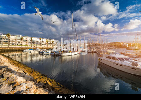 Moored fishing boats in the harbor at sunset with flying seagulls over the boats, Lagos, The Algarve, Portugal. Yachts moored in the marina, Lagos, Al - Stock Photo