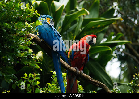 Portrait of colorful parrots against jungle background in australia zoo - Stock Photo