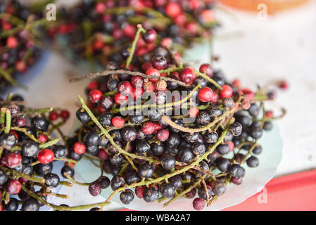 Antidesma thwaitesianum fruit Thai Blueberry in the local fruit in northeastern red wild berry in Asia / puncticulatum Miq Stilaginaceae - Stock Photo