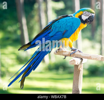 Macaw parrot against forest background - Stock Photo